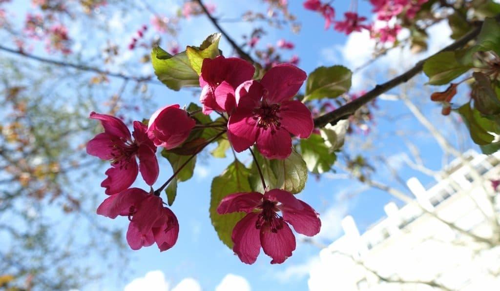 Les plus belles photos de Paris au printemps