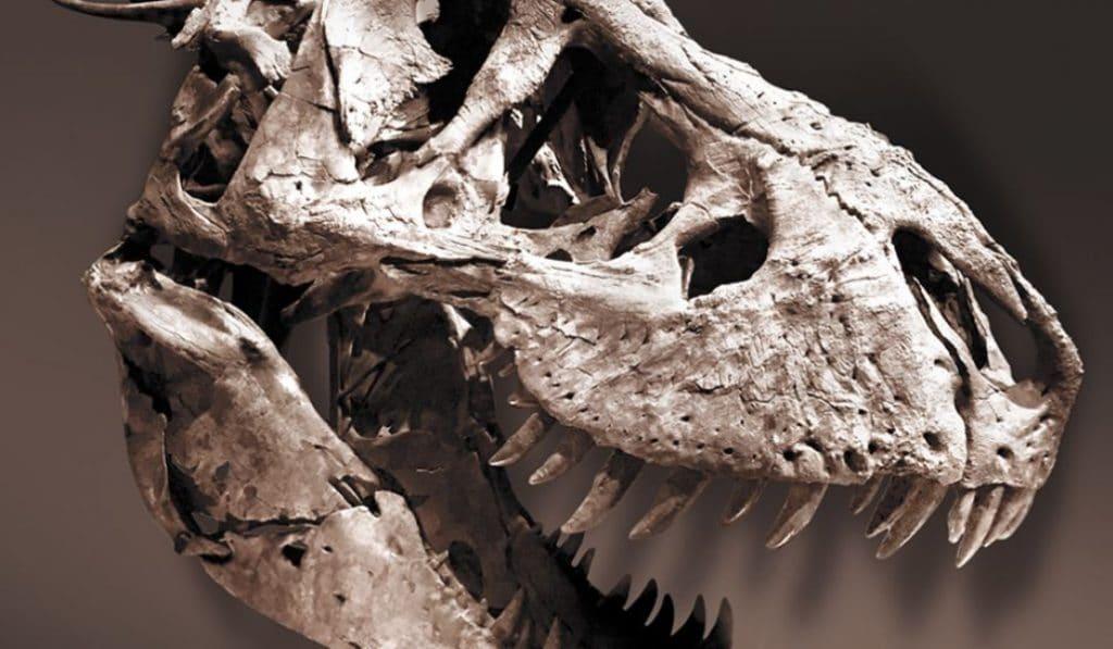 Les dinosaures envahissent Paris!