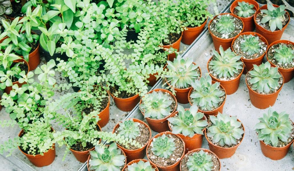 Grande vente de plantes «prêtes à poser » à tout petit prix ce week-end !