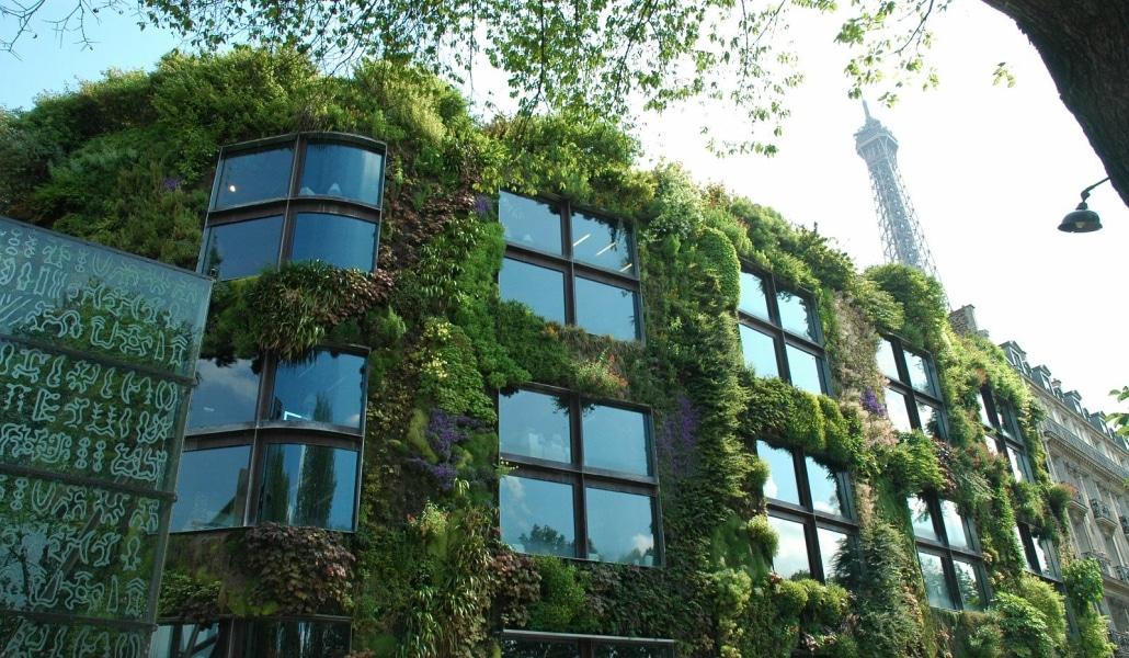 La mairie de Paris offre des arbres pour végétaliser la ville
