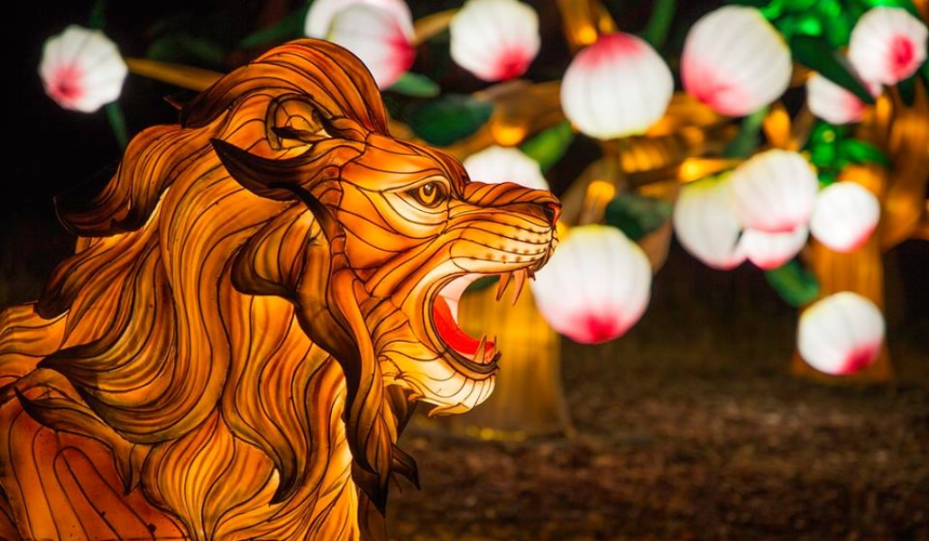 600 lanternes chinoises géantesilluminent le zoo de Thoiry !