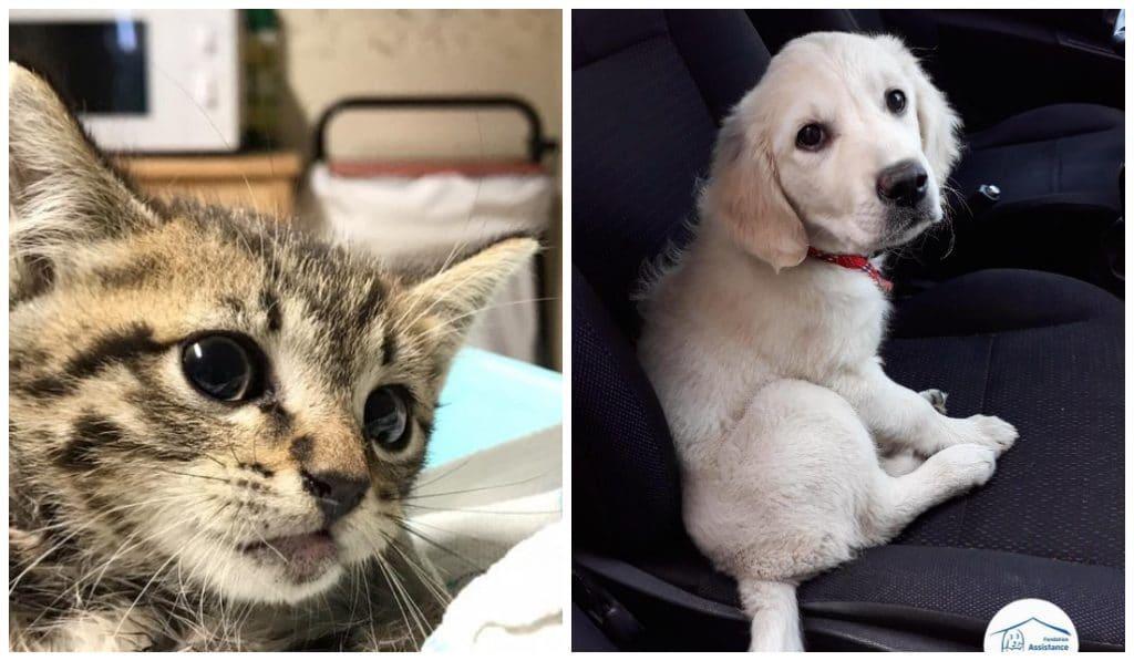 Adoptez un chien ou un chat abandonné ce week-end !