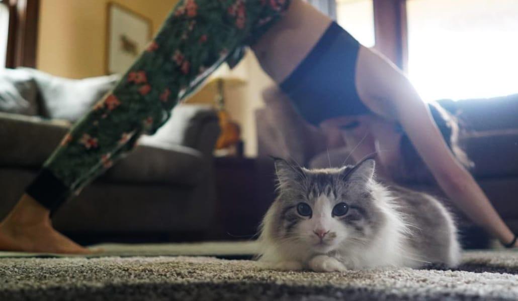 Le Pet Yoga : la nouvelle tendance de faire du Yoga avec son animal de compagnie !