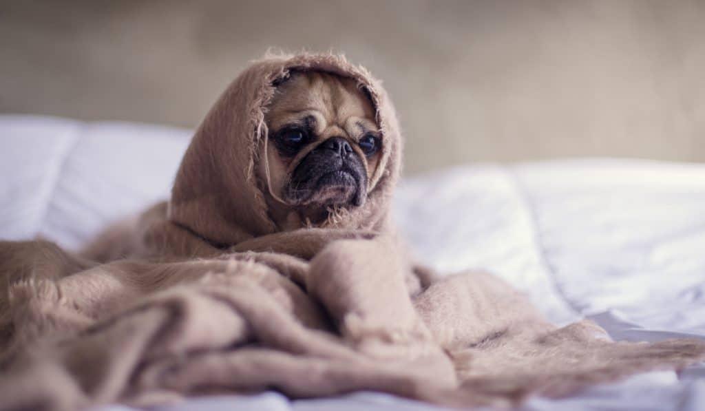 La SPA annule le Noël des animaux qui devait avoir lieu ce week-end