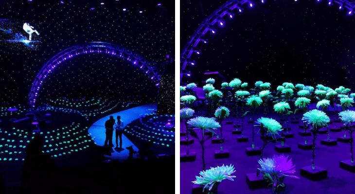 Des plantes luminescentes illumineront bientôt Disneyland Paris !