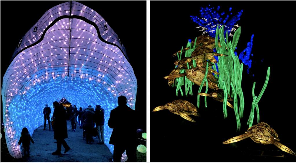 «Océan en voie d'illumination», la féérie continue au Jardin des Plantes lors du festival des lumières !