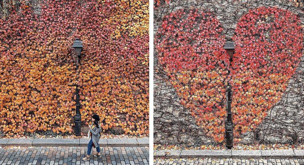 Le mur de feuilles de Montmartre : le spot le plus Instagrammable de l'automne à Paris