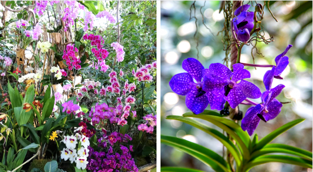 Mille & une orchidées : 1000 pieds d'orchidées en fleurs au Jardin des Plantes !