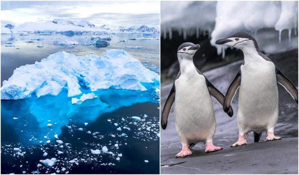 Confinement : une fascinante visite virtuelle gratuite de l'Antarctique…
