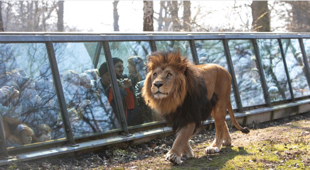 Confinement : les animaux sauvages du Zoo de Thoiry en LIVE gratuitement depuis chez vous !