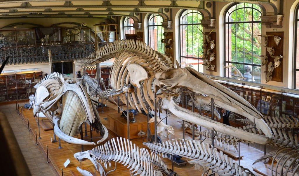 Confinement : Visitez le Musée d'Histoire Naturelle depuis chez vous !