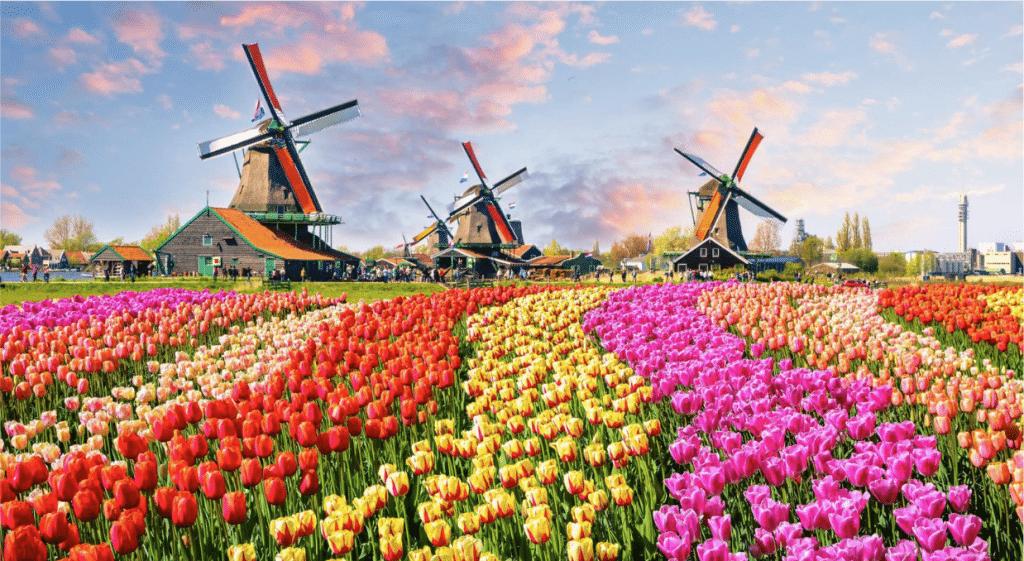 Le plus grand parc floral du monde aux Pays-Bas se visite en ligne gratuitement !