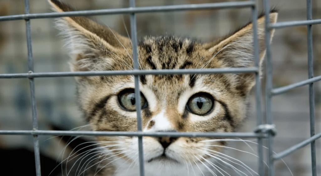 Coronavirus : Adopter un animal en refuge sera bientôt une nouvelle dérogation au confinement !
