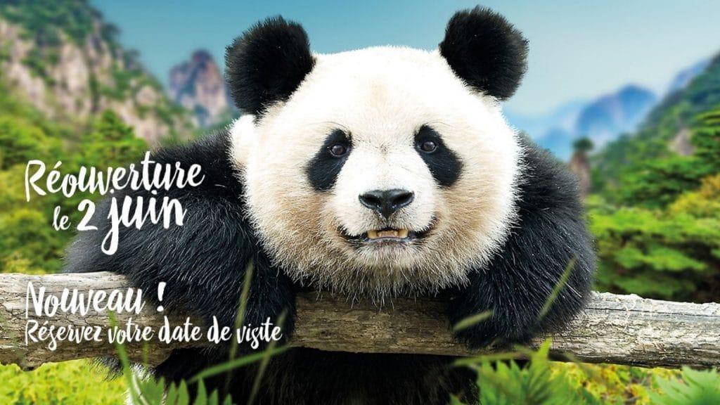 Le Zoo de Beauval, élu plus beau Zoo de France, rouvre ses portes le 2 juin !
