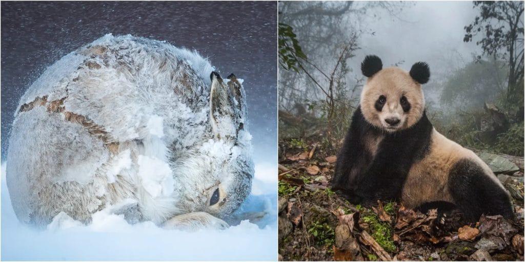 Les extraordinaires photographies des gagnants du concours BigPicture Natural World 2020 !