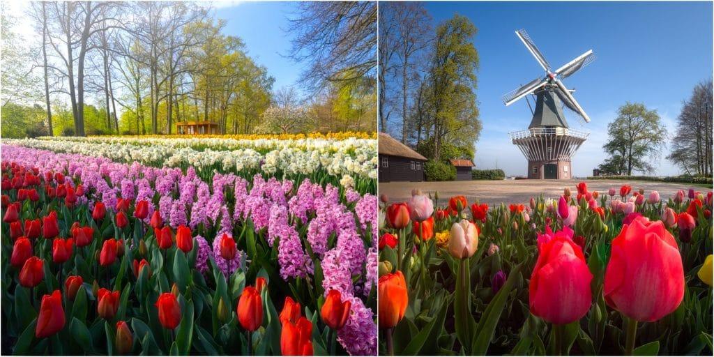 15 photos merveilleuses du plus beau parc floral du monde déserté !
