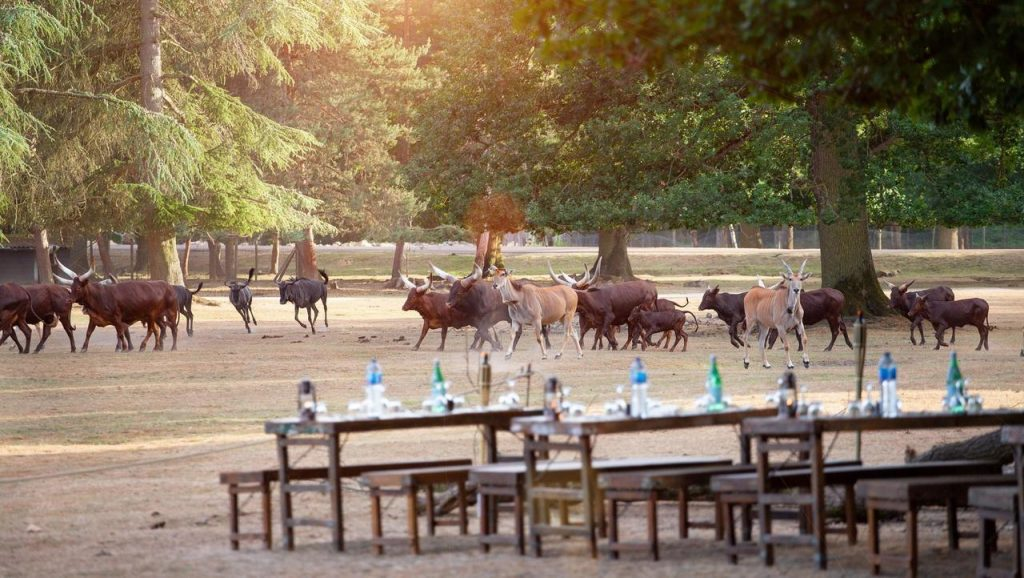 Insolite Dîner Safari Zoo de Thoiry BBQ africain géant