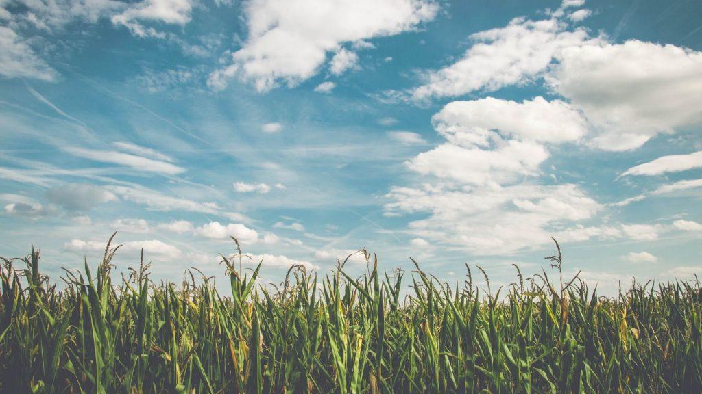 Pop Corn Labyrinthe : un labyrinthe géant dans un grand champ de maïs débarque près de Paris !