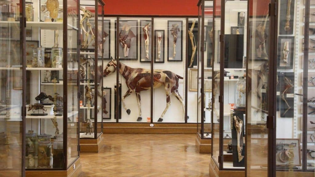 Insolite : Le Musée Fragonard, musée des horreurs médicales, rouvre ses portes !