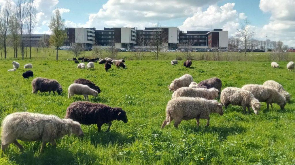 Découvrez vos talents de berger dans une ferme urbaine à deux pas de Paris !