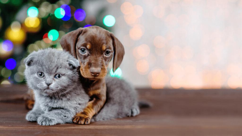 Abandon animaux de compagnie certificat adoption obligatoire 2021