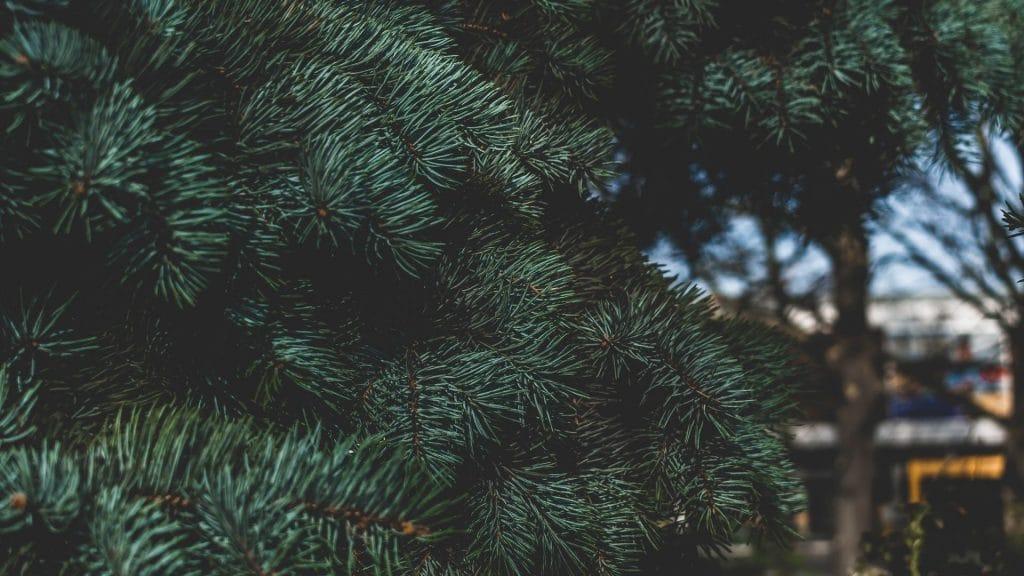 sapin arbre de noël paris collecte dépôt recycler écologie