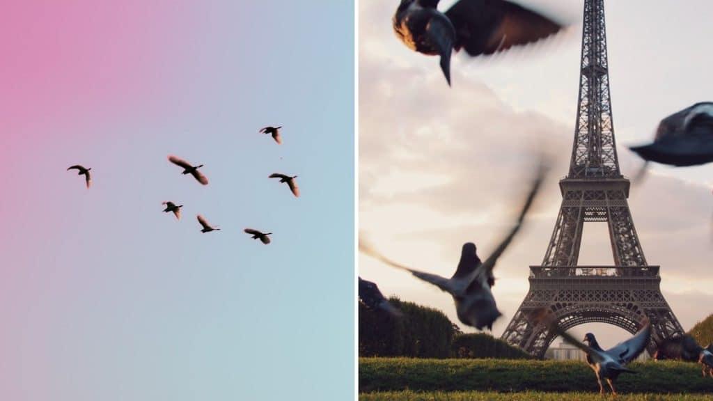 oiseaux paris décompte recensement ligue de protection des oiseaux ile de france grand paris nature