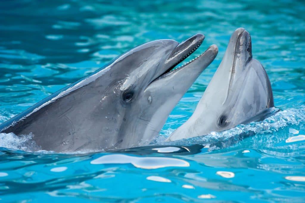 Bien-être animal : le Parc Astérix ferme définitivement son delphinarium !
