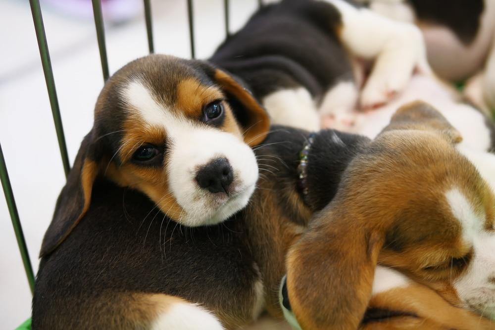 Vente chiens chats animaleries interdite 2024 Assemblée nationale vote