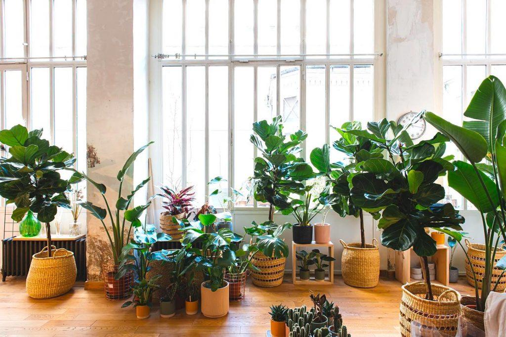 boutique plantes XXL Sweet Jungle Paris 10