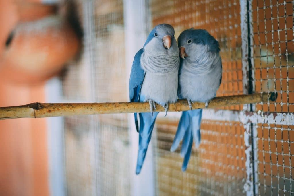 Fermeture Marché aux oiseaux Paris Ile de la Cité conseil de Paris vote