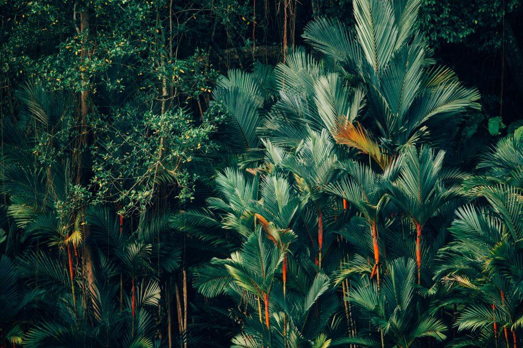 Sweet Jungle - plantes - décoration - bureau - appartement - ornement - floral - jardin - plantes vertes