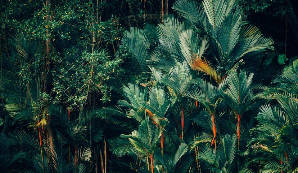 Sweet Jungle veut rendre votre espace de travail plus vert !