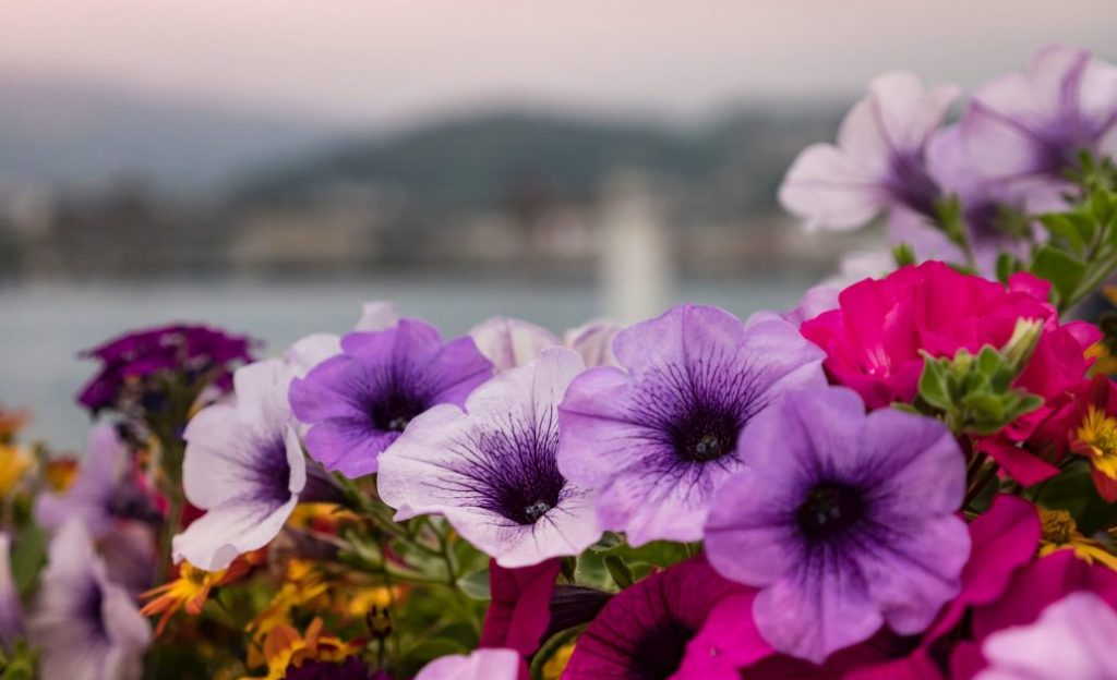 journée des plantes - chantilly - jardin - culture - botanique - fleurs - plantes - château - découverte - ateliers - animations - floral -