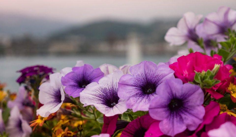 Domaine de Chantilly : assistez au printemps des journées des plantes