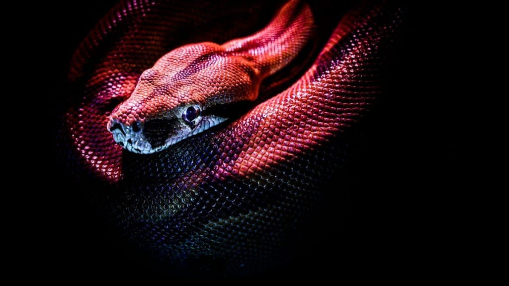 shooting photo serpents saint valentin paris couple deux idée cadeau original lia vinova