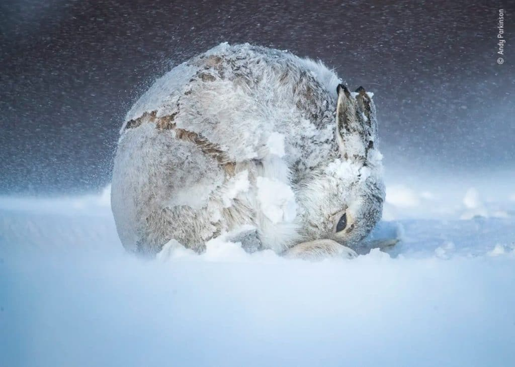 Lauréats concours photo nature Wildlife photographer of the year 2020