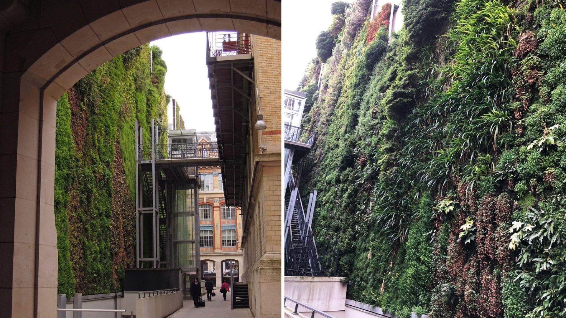 mur végétal rue d'alsace paris plus grand nature gare nord est patrick blanc