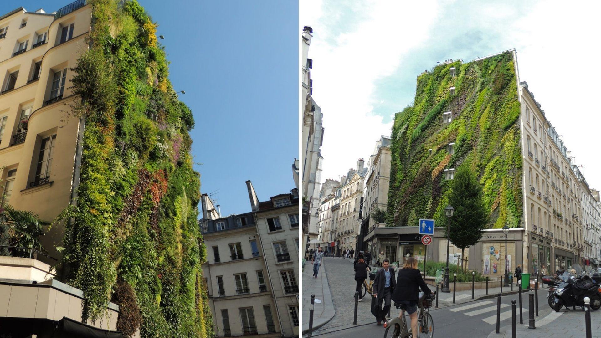 murs végétaux paris oasis aboukir végétal vert