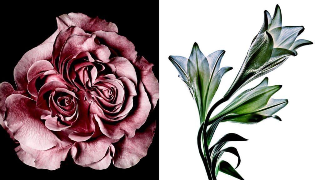 exposition fleurs balade paris marais art plein air photographie stéphane de bourgies