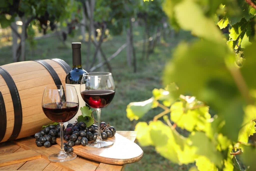job de rêve : gagnez 8500€ par mois pour goûter du vin et vivre dans un vignoble