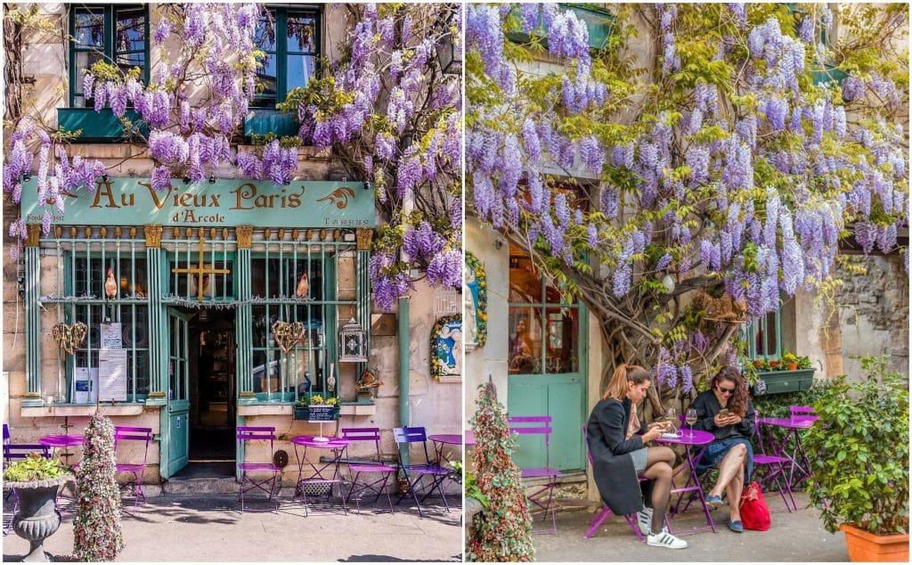 Plus belles glycines en fleurs Paris printemps