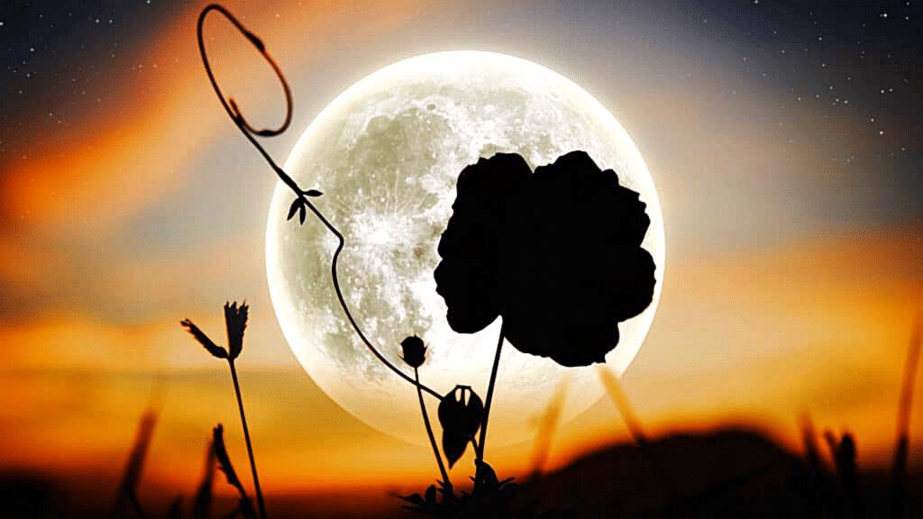 Super Lune 2021 Super Lune des Fleurs 26 mai 2021