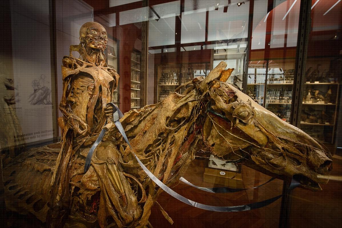 musée fragonard paris maisons alfort horreur médicale anatomie vétérinaire
