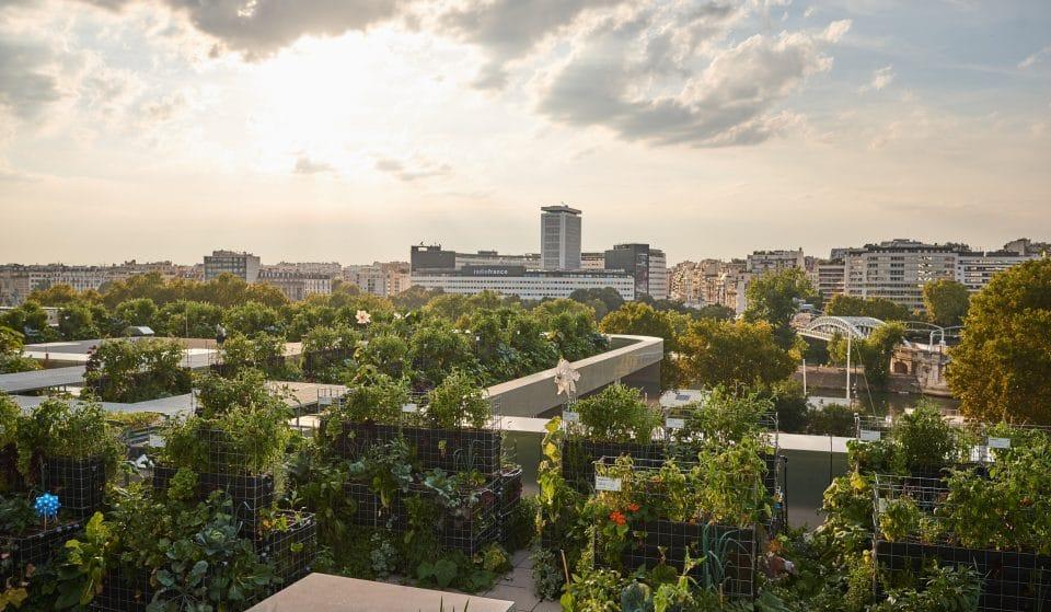 Paris : reconnectez-vous à la nature au coeur des fermes urbaines Peas & Love !