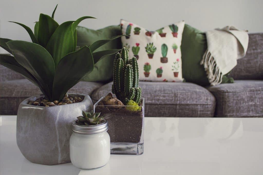 La marque de décoration et d'ameublement à petit prix Maxi Bazar ouvre sa première boutique à Paris en septembre !