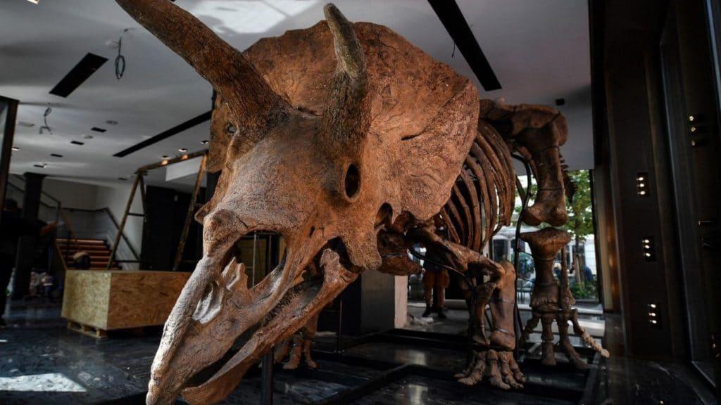 dinosaure exposition paris tricératops big john vente aux enchères