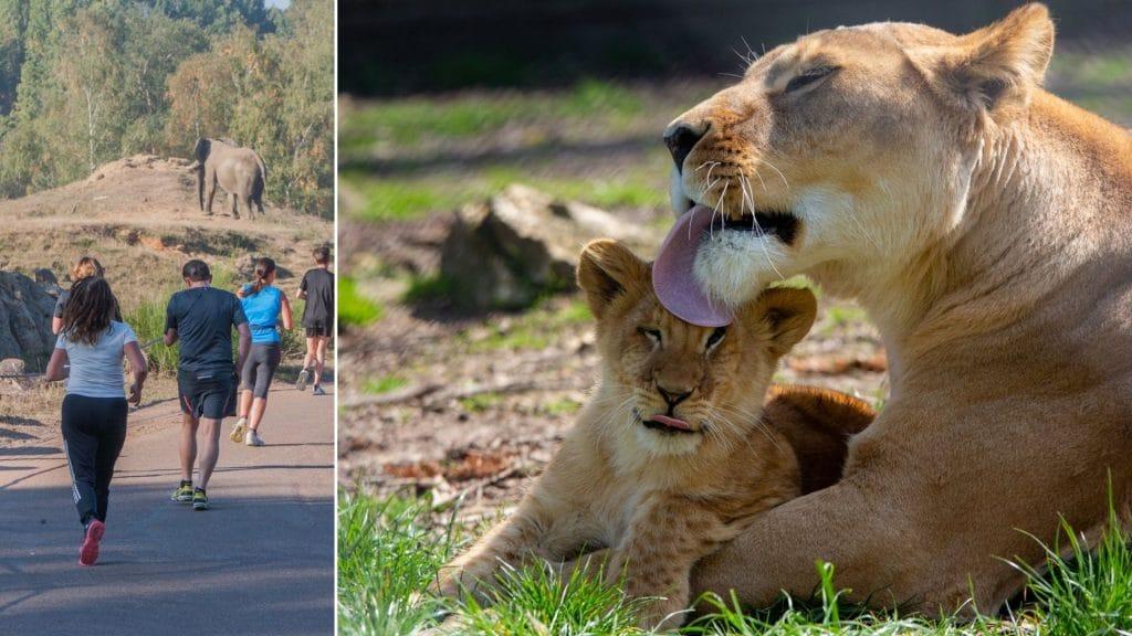 Thoiry Wild Race 2021 : Une course safari parmi les animaux, ce week-end!