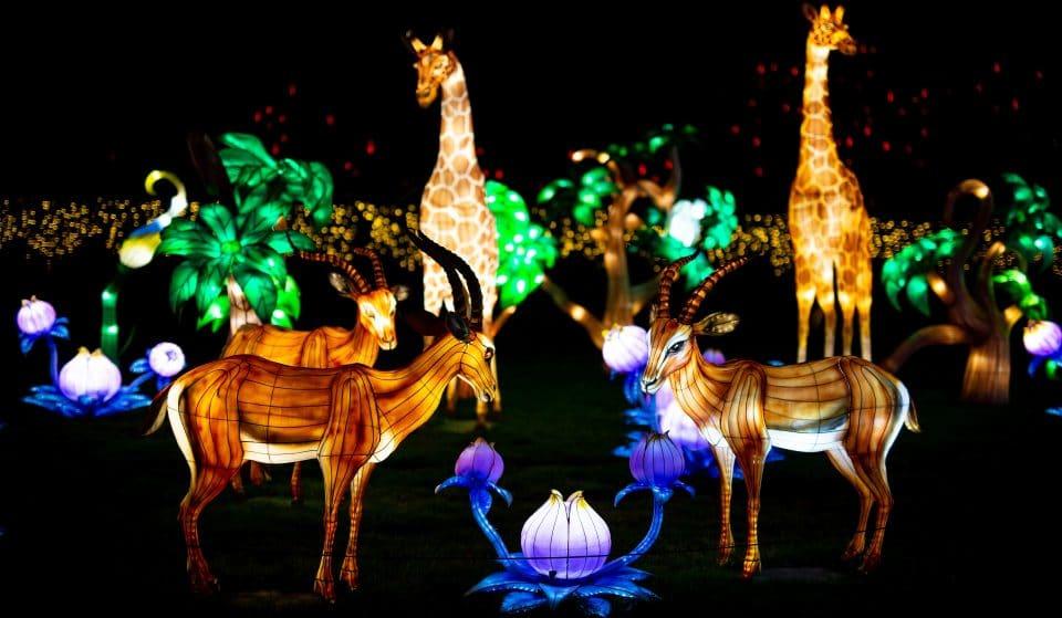 Le Festival des lanternes Thoiry Lumières Sauvages de retour en octobre !