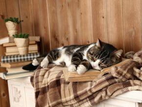 Dans les Yvelines, il existe une maison de retraite pour les chats !